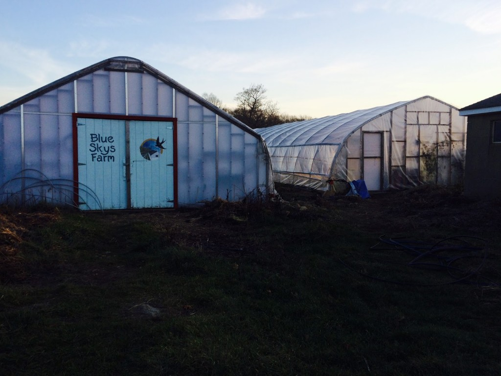 The hoop houses in the late afternoon sun.