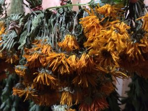 Calendula dried.