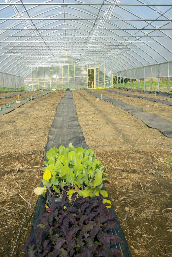Getting ready to plant in new high tunnel | Blue Skys Farm | local food Cranston, Rhode Island