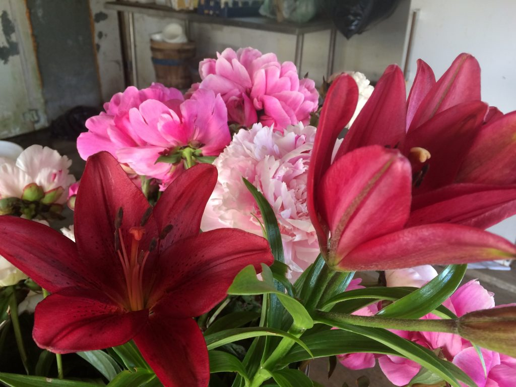 peonies and lily