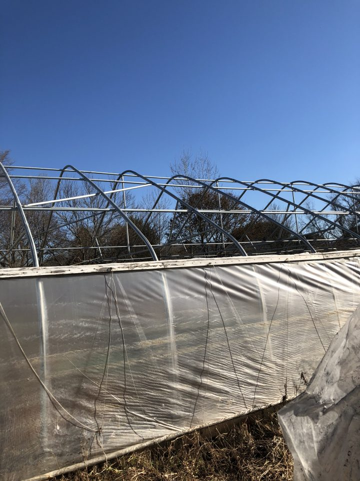 After 6 years, we removed the plastic on this high tunnel for the winter, to allow rain inside. We'll add new plastic next spring.
