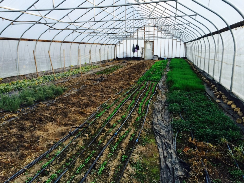 Behind the doors of the first hoop house.